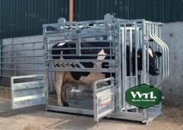 Nugent-Head-Yoke-Cattle-Tech-750x562